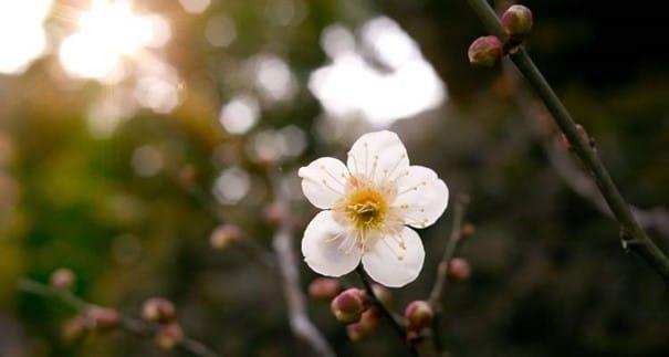 BrightonSEO Konferenz